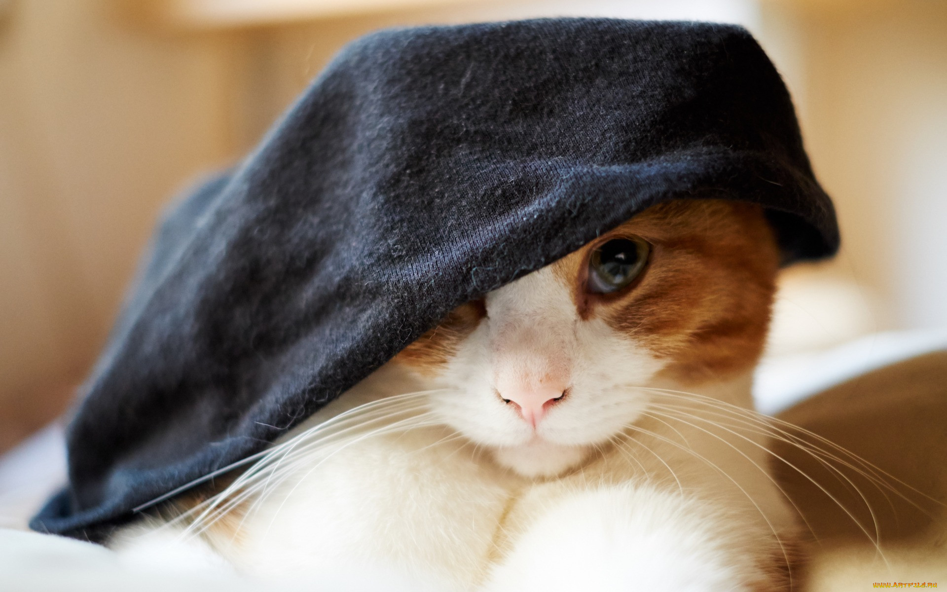может произойти коты в кепках картинки интерпретация